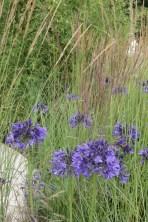 img 1567 Hampton Court Flower Show a world of flowers