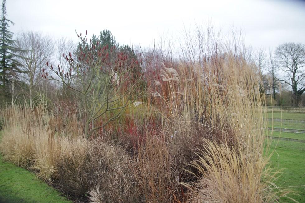 img 4151 1 Winter at Ellicar Gardens