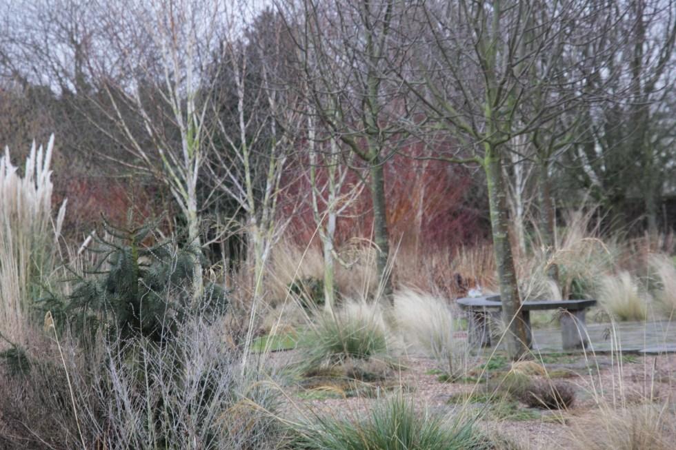 img 4161 1 Winter at Ellicar Gardens