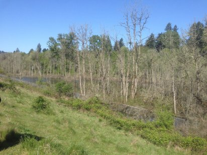 Wetland Perspective