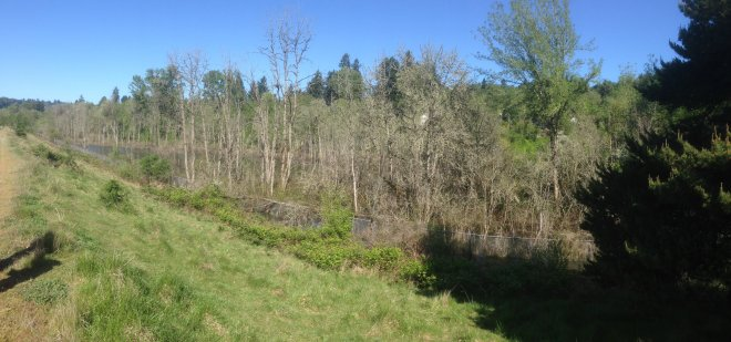 Wetland Overview