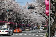 Nakano Dori Sakura Matsuri (中野通り桜祭り)