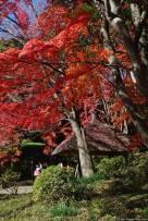 Koishikawa Kōrakuen (小石川後楽園)