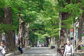 Ōkunitama Jinja (大國魂神社) Zelkoven-Alle (ケヤキ並木)