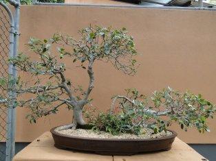Section bonsai