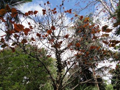 Quelques feuilles exotiques