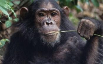 Er der en evolutionsbiologisk forklaring på hvorfor nogle af os er særligt sensitive?