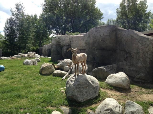 #RunningTo: Zoo Montana