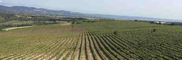 Les vins siciliens se réapproprient leur identité