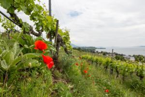 Le premier domaine bio de Suisse n'a qu'un quart de siècle!