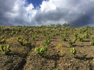 Priorat: la tentation d'une «Bourgogne catalane»