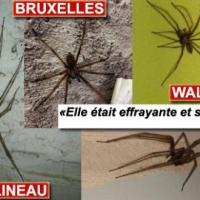 Faut-il s'inquiéter de l'arrivée d'araignées géantes chez nous? (photos et vidéo)