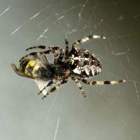Une pluie d'araignées s'abat sur l'Australie