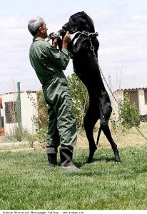 Iranian_Police_Dog_Training_Tall