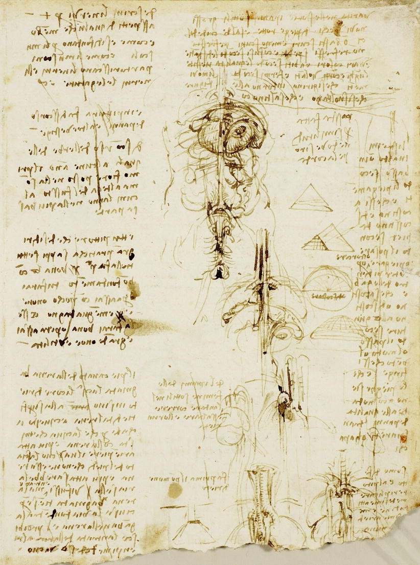 Scollare Carta Da Parati.Leonardo S Use Of Drawing Thoracic Key