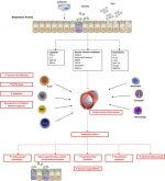 Definition, Causes, Pathogenesis, and Consequences of Chronic Obstructive Pulmonary Disease Exacerbations