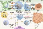 The Biology of Lung Cancer