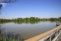 2017-Amica-Swan-Lake-6-10-17-IMG_0096
