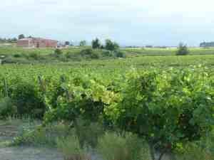 O'Vineyards