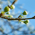 Spring Clean your home naturally
