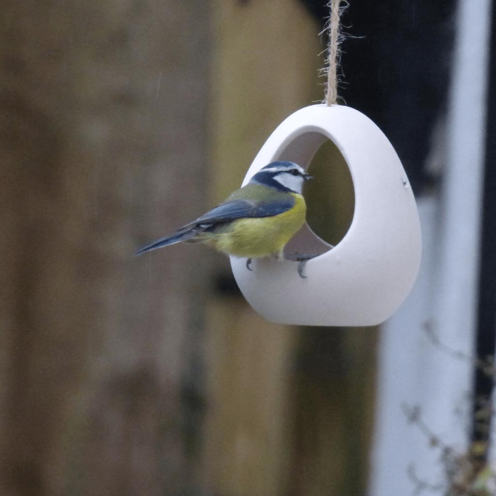 Lockdown Activities - Garden Birdwatch