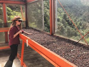 green coffee from colombia for export