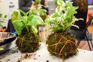 Kokedama at Brooklyn Brainery: Make Your Own Living Moss Balls Class in New York City