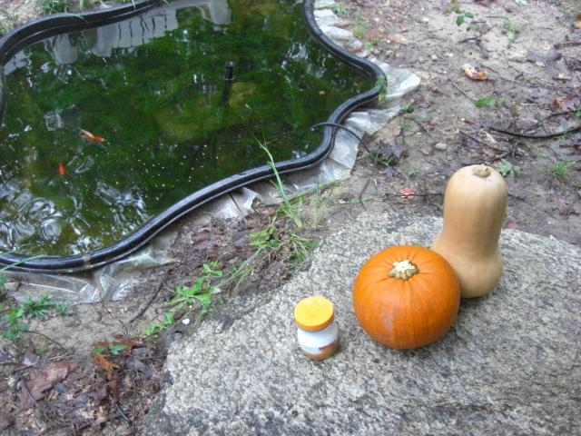 Squash and Pumpkin feed the fish.