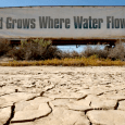 """""""The idea of your nice little green grass getting lots of water every day — that's going to be a thing of the past,"""" said Gov. Jerry Brown.  California […]"""