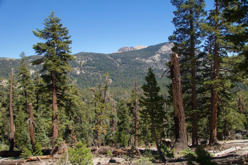 Downed trees and the backside of Mammoth