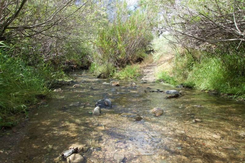 Alamo Pintado Creek