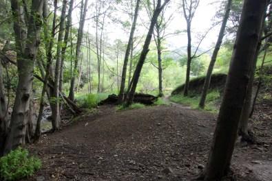 Shady grove along the Grass mountain Trail