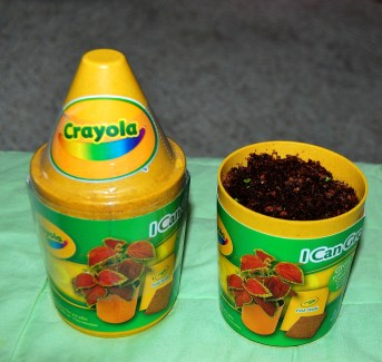 """Coleus Seed Kid"" from Crayola"