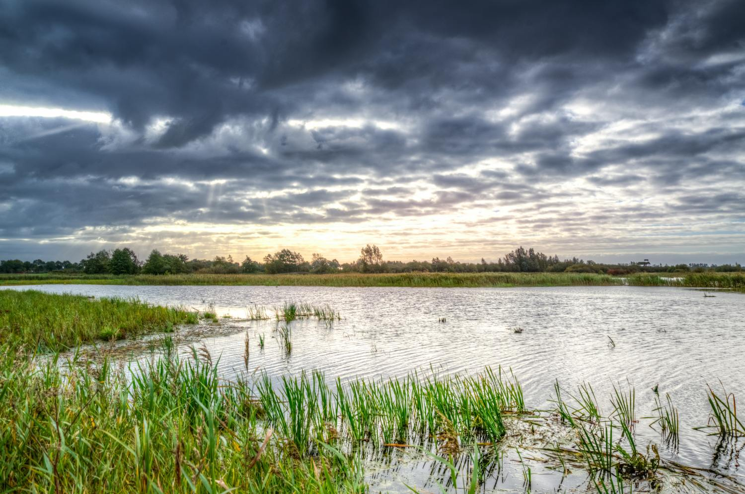 Difference between a Marsh, a Swamp, a Bog and a Fen