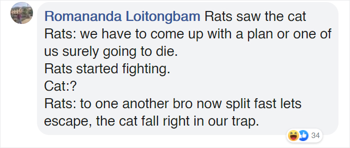 woman captures hilarious video of a cat watching two rats fight