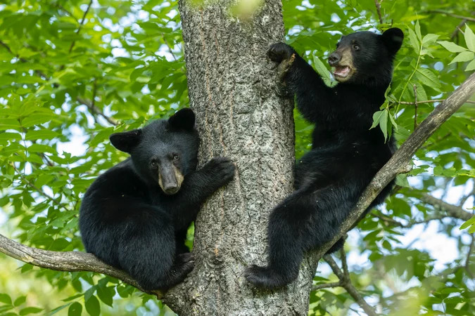 conservation officer fired for refusing to kill bear cubs wins legal battle to clear his name