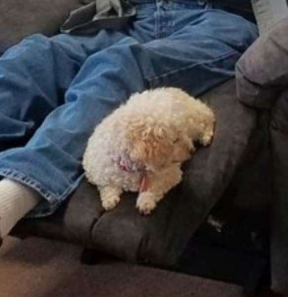 grandpa takes his pet dog to furniture store to make sure she approves the new chair too
