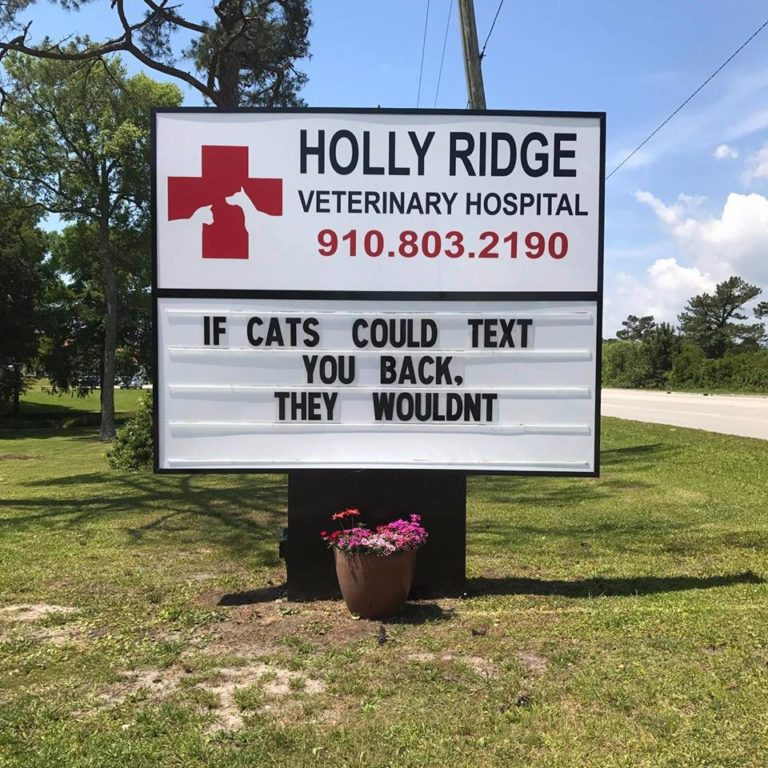 15+ hilarious vet signs any cat lover can relate to