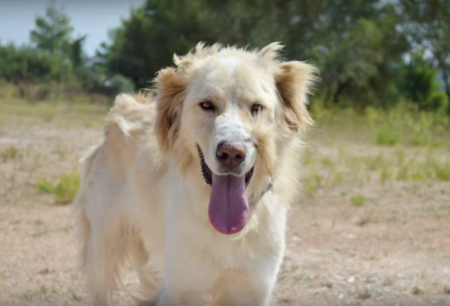 """owner shoots dog in the face for always being """"too happy"""""""