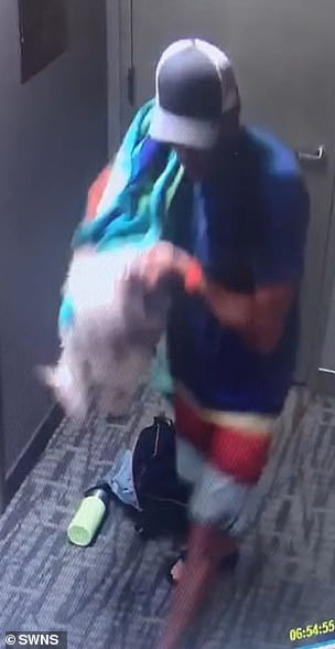 ceo is caught on security camera mercilessly beating his four-month-old puppy named bici, grabbing the whimpering dog by the throat and slapping it around at his santa monica condo