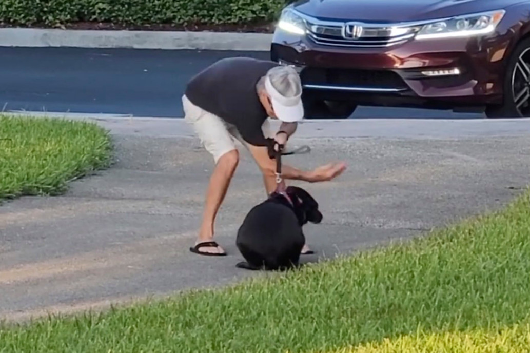 cowardly dog owner caught on video punching and beating down helpless cowering pup