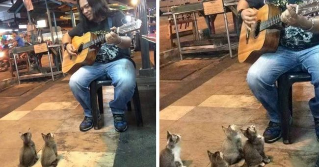 this street singer was ignored by everyone, then 4 music-loving kitties came to show their support