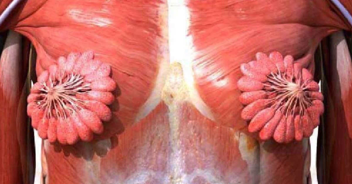this image of what human milk ducts look like is blowing people's minds