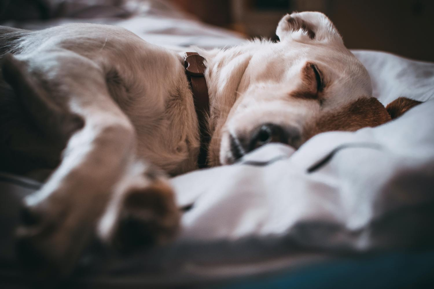how to get rid of fleas on dogs fast and naturally