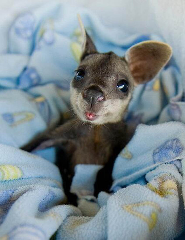 30 cute baby animals that will make you go 'aww'