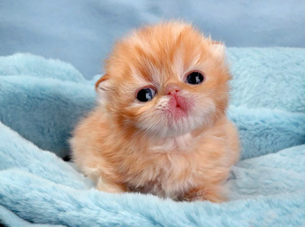 91 of the cutest kittens ever