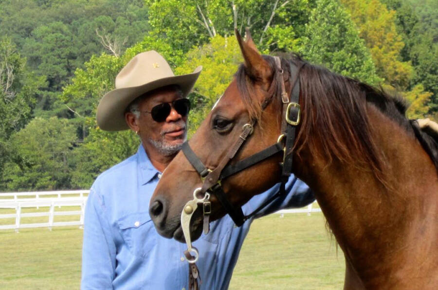 the heartwarming story of morgan freeman's efforts to save america's honey bees by making his ranch a bee sanctuary