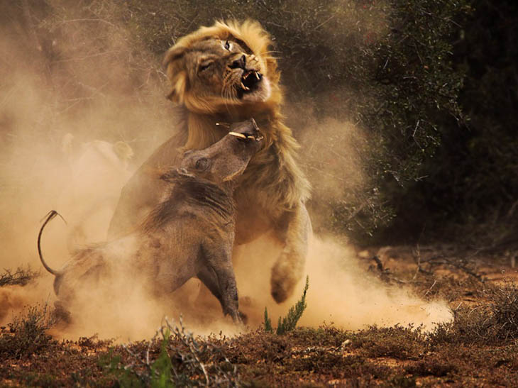 33 Perfectly Timed Animal Photos That Are Too Perfect To Believe, #21 Is Unbelievable
