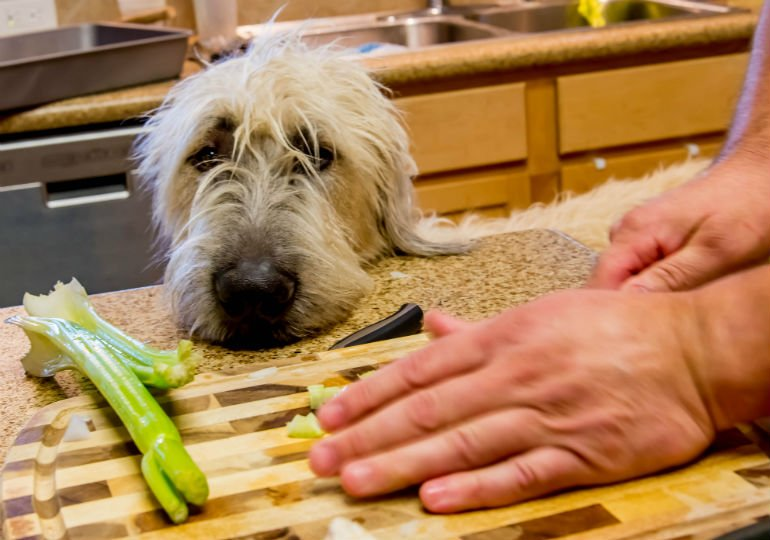 Fun Fact: Dogs Can Eat Celery, But There's A Trick