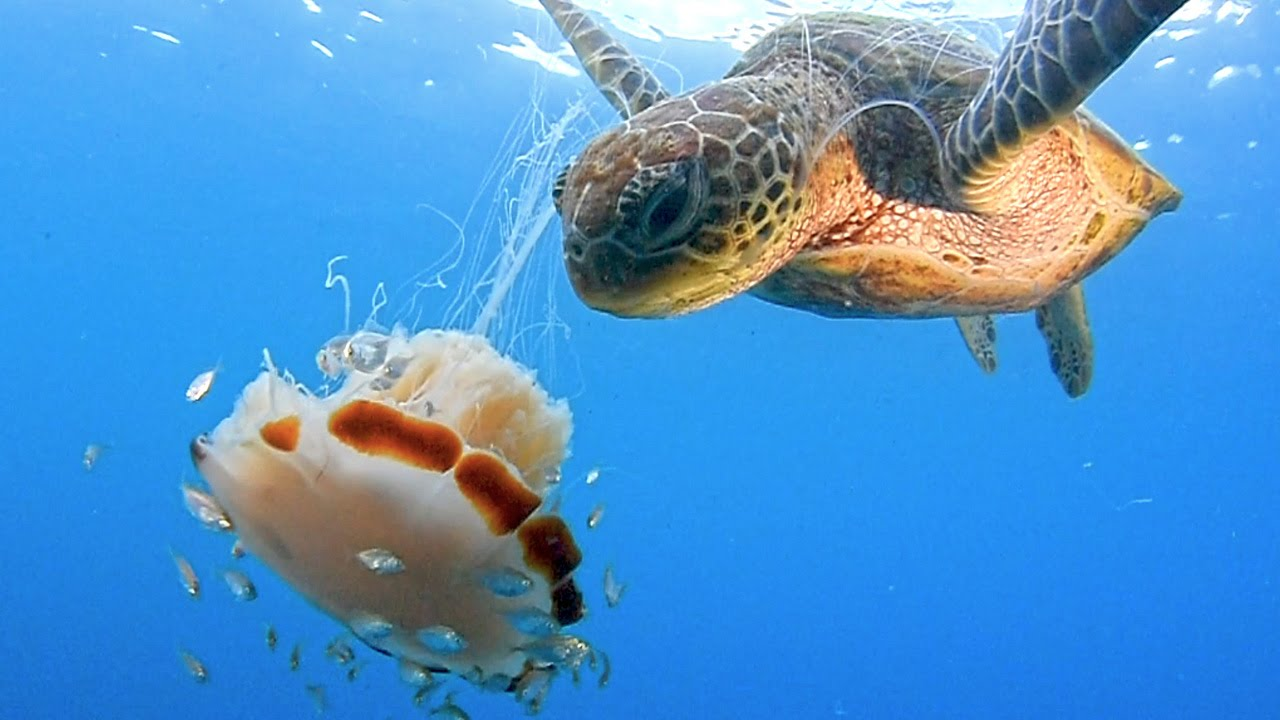 The Sea Turtle's Mouth Horrifying Appearance